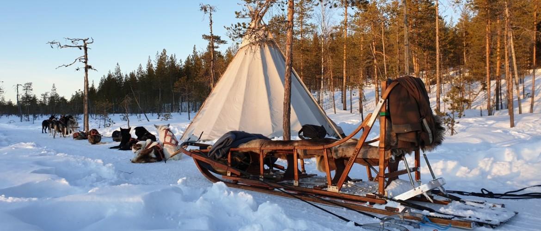 Beleef met je gezin een huskytocht in Zweeds Lapland