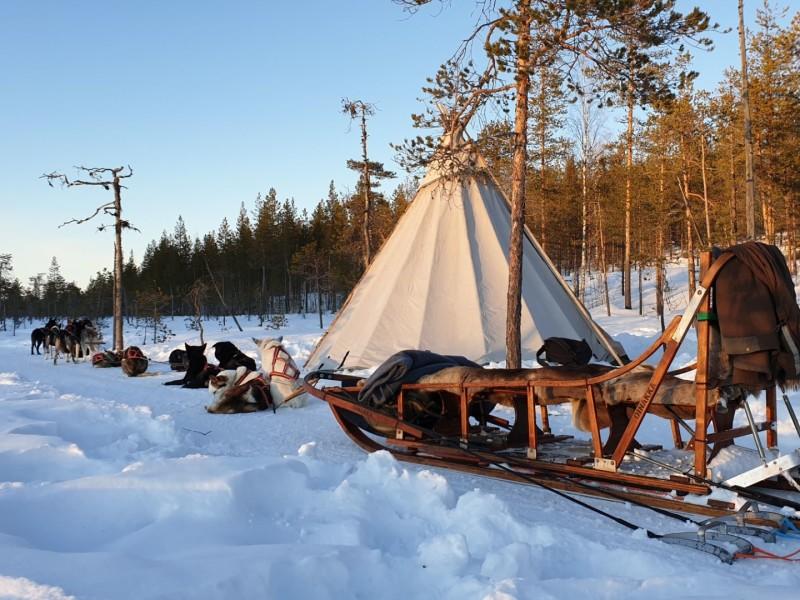 Huskytocht met gezin in Lapland