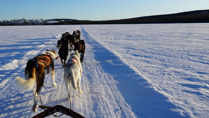 Huskytocht met kinderen in Lapland