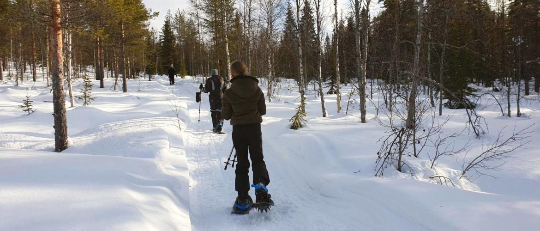 Sneeuwschoenwandelen in Zweeds Lapland