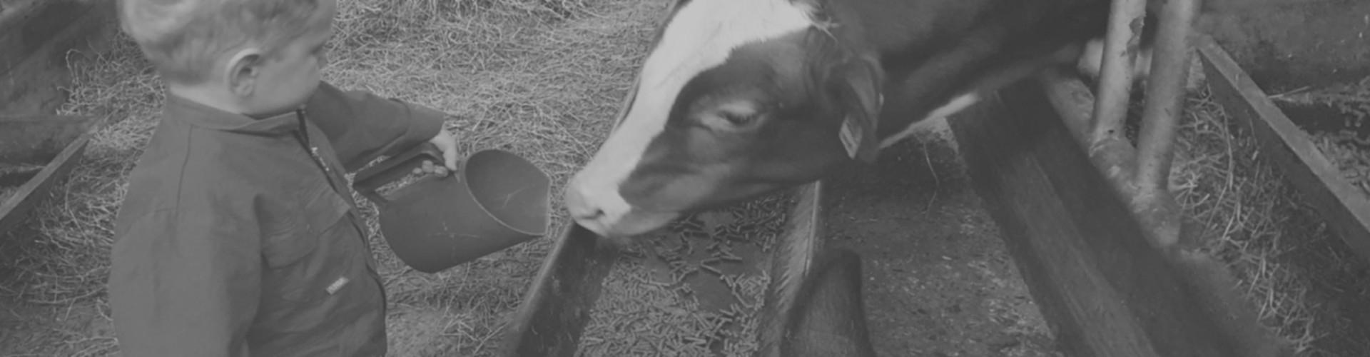 Farmcamps met een peuter