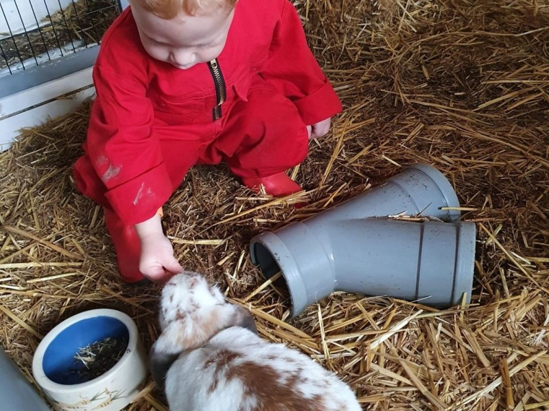 FarmCamps met kleine kinderen