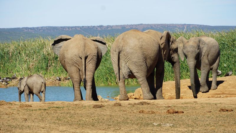 Tips Addo National Park met kinderen