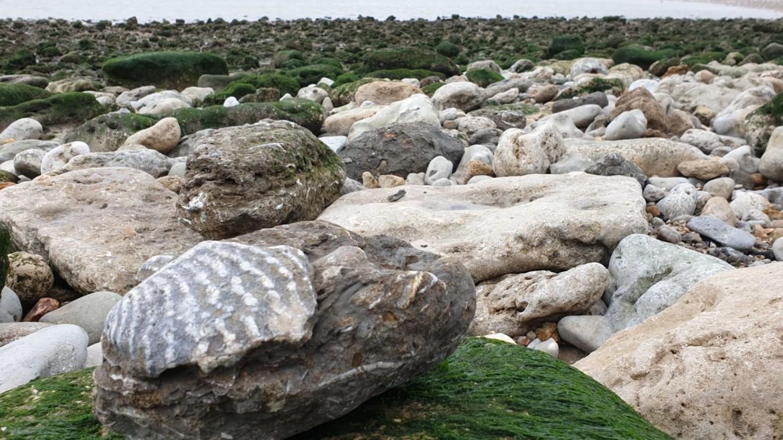 Fossielen zoeken in Normandië met kids