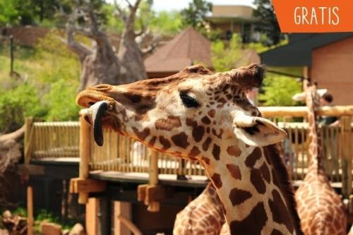 Leuke hotels in Zuid-Afrika met kinderen