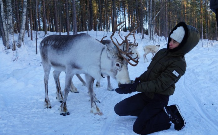 Meet the reindeers in Lapland