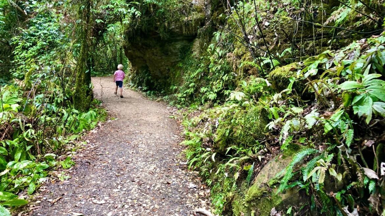 Ruakuri Bushwalk rondreis Nieuw-Zeeland met kids