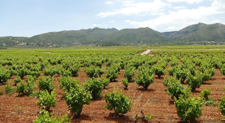 Wijnvelden Andalusië