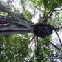 Flight of the Gibbon, slingeren in de jungle