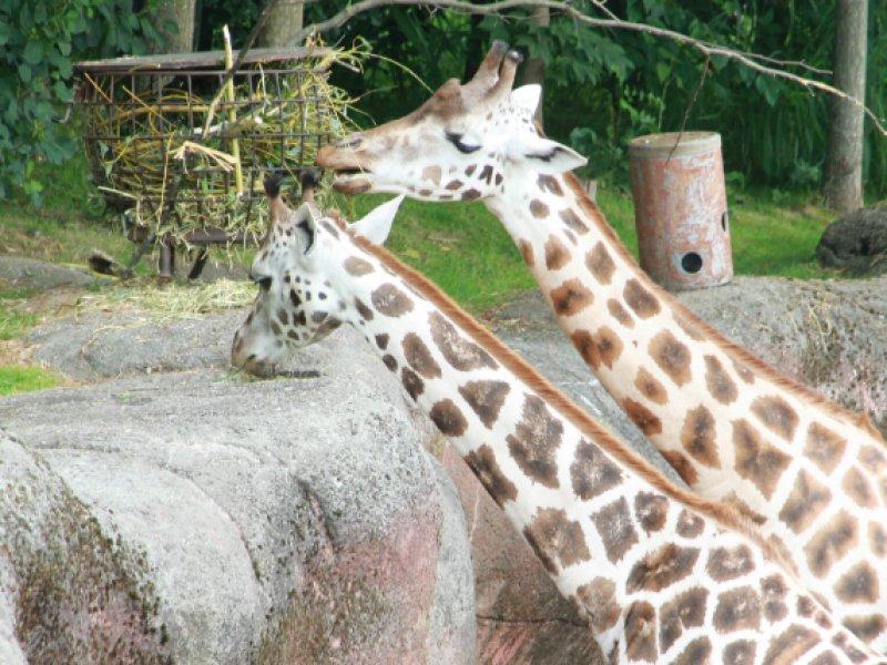 Gaia Zoo Parkstad Limburg