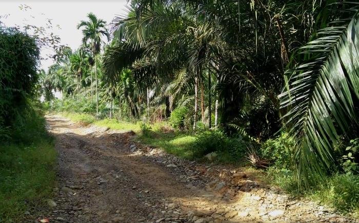 De weg naar Tangkahan met een 4x4