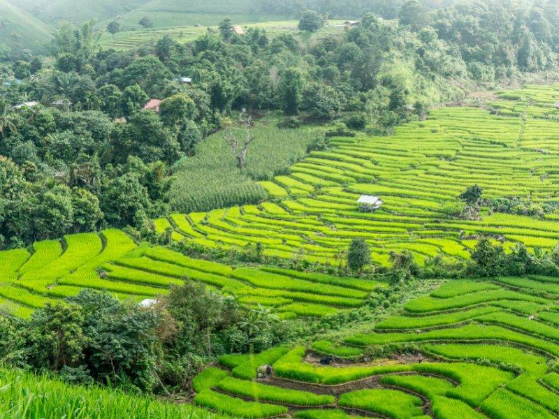 Rijstterrassen Chiang Mai