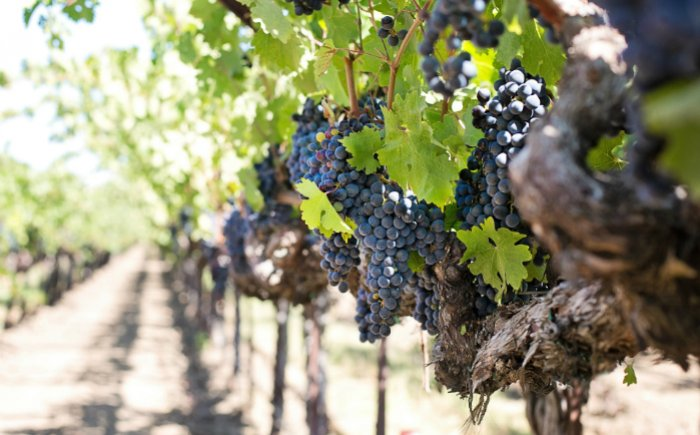 Wijnroute Valle d'Aosta