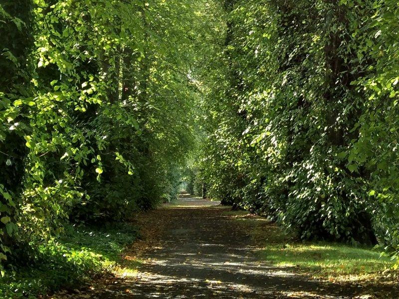 Wandelen in de bossen in Schotland