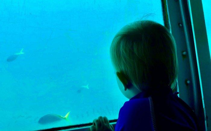 Naar het Great Barrier Reef met een peuter