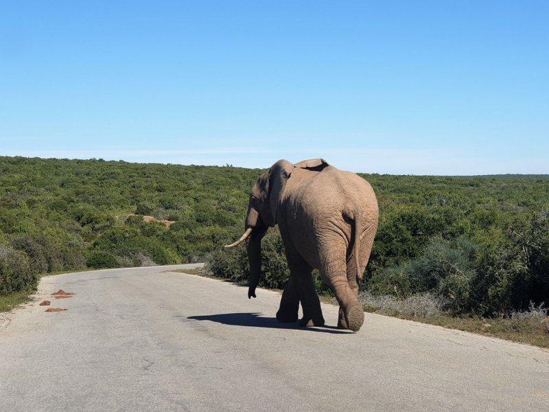 Nationaal park Addo Elephant met gezin