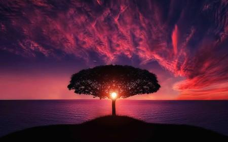 paarse boom kleurenlicht voor kracht