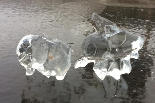 Mooi gelukt ijssculptuur van een vlieg. Gemaakt tijdens de workshop ijssculpturen voor scholen en bso