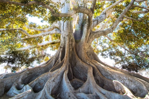 The better the roots the higher you fly