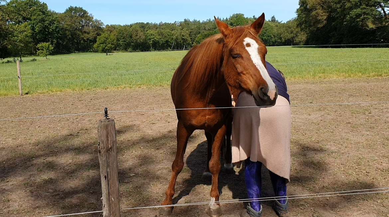Paardenkracht - stipje geniet