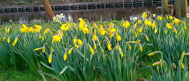 De lente