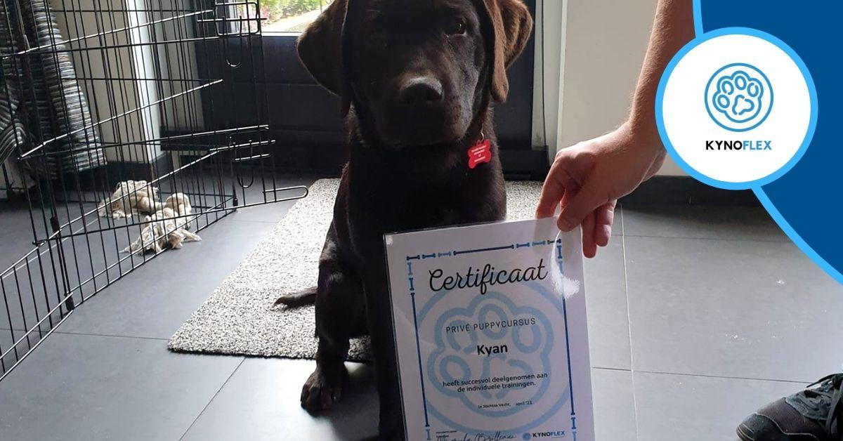 Kyan heeft de puppy cursus afgerond!