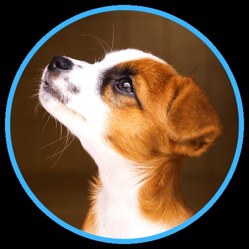 KynoFlex Hondenschool Utrecht complete puppycursus