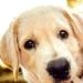 KynoFlex Honden Kop afbeelding