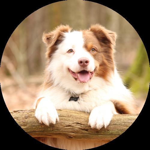Privé honden trainingen
