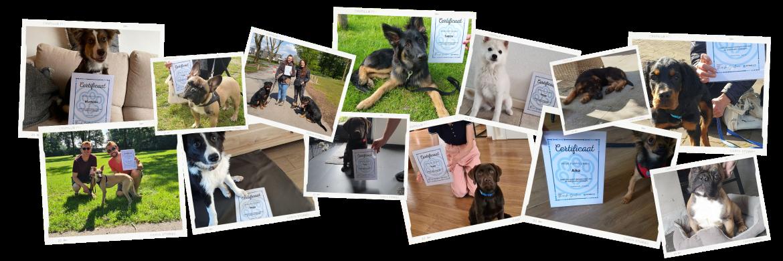 Deze pups hebben het certificaat puppycursus utrecht