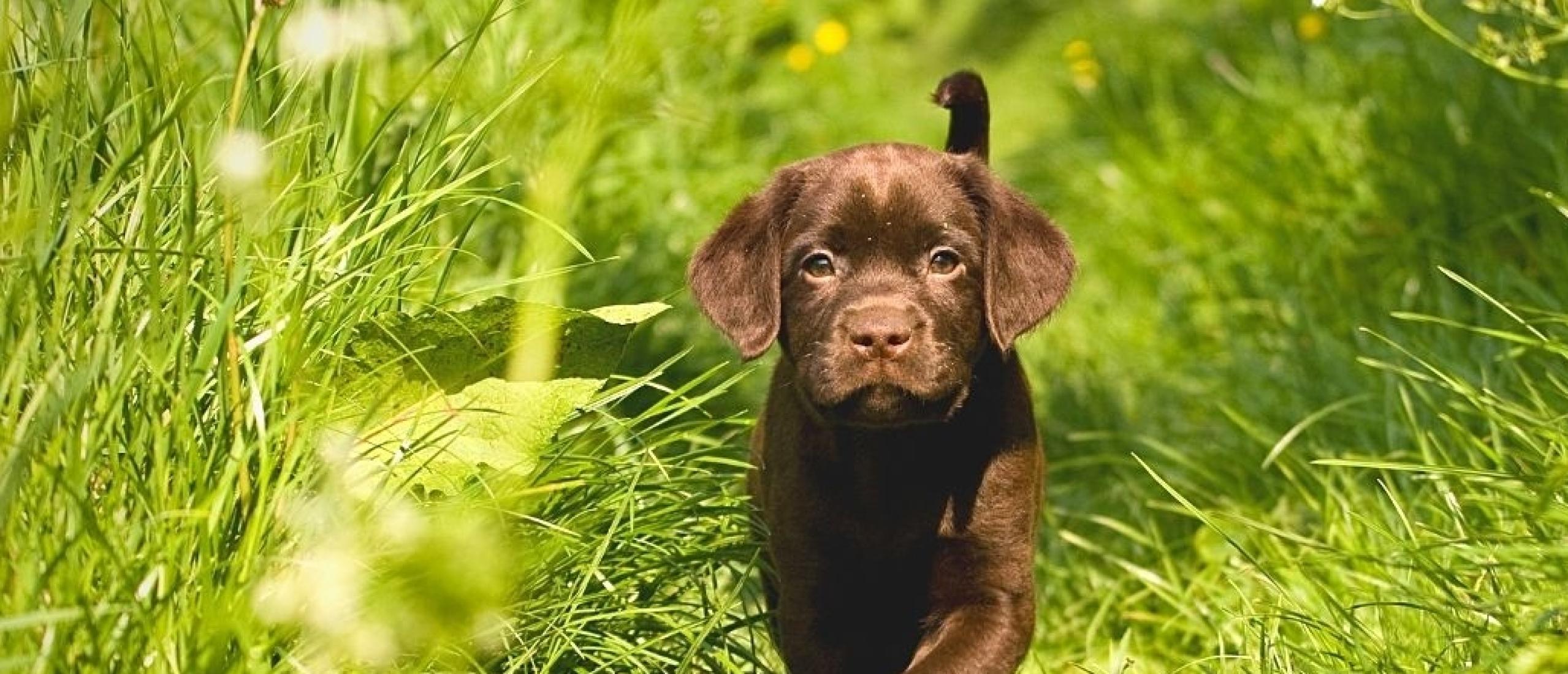 Waarom kiezen voor een privé puppycursus?