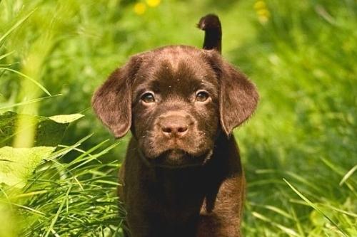 Waarom kiezen voor een privé puppycursus