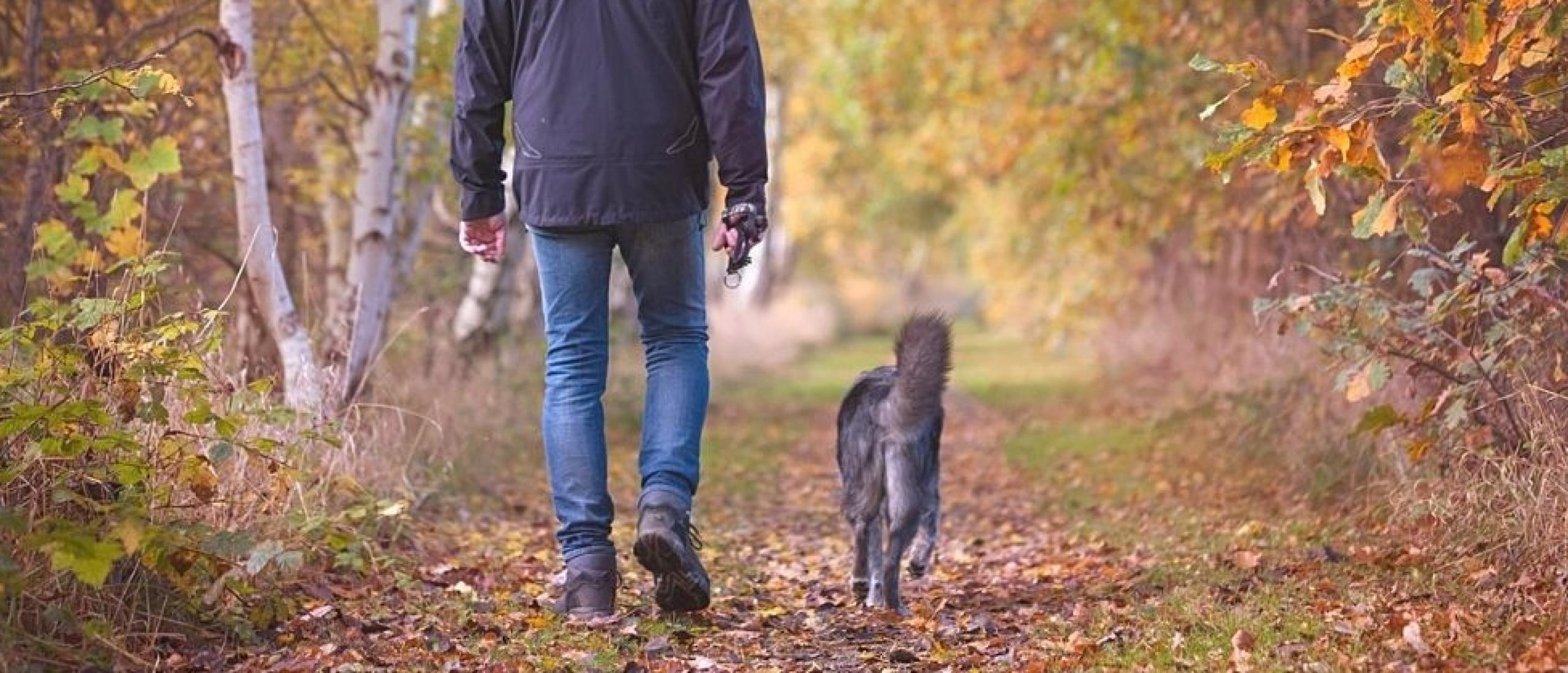 De mooiste honden wandelplekken in Utrecht?