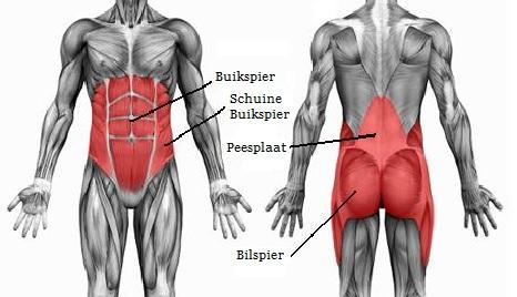 Welke spieren gebruik je bij traplopen