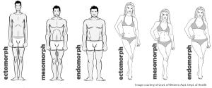 De Verschillende Lichaamstypen