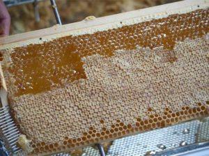 honing bijenkast
