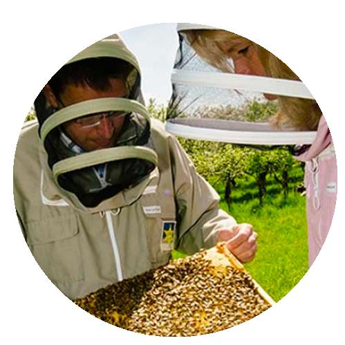 Gratis ebook: hoe leeft een bijenvolk