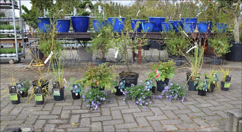 Planten uitzetten voor beplantingsplan