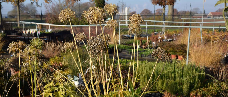 Groenblijvende en bladverliezende planten in de winter