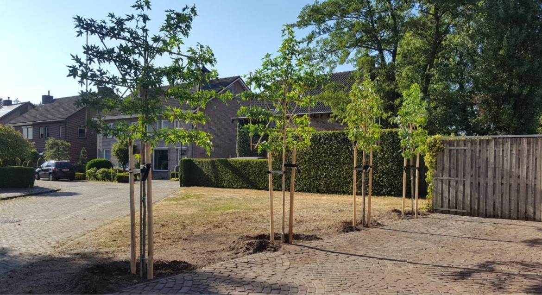 Verankeren van bomen met boompalen