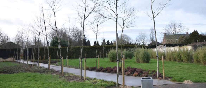 Bomen en planten vastzetten, verzorgen en verankeren