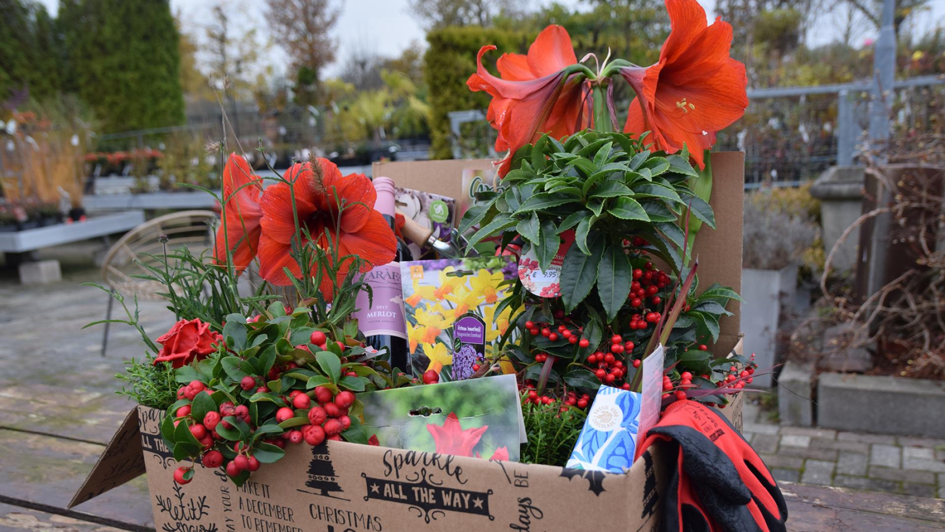 Kerstpakket idee gezocht: geef planten cadeau!