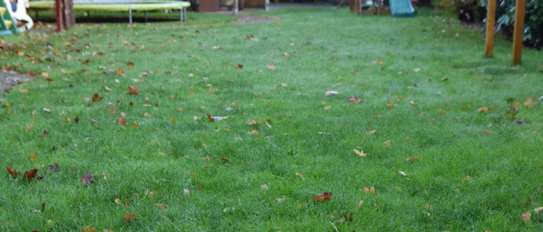 Het gazon optimaliseren voor de winter
