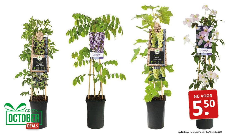 Green October Deal: Klimplanten