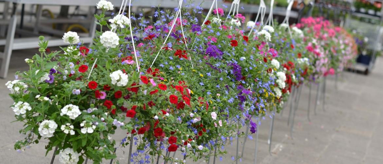 Hanging baskets - tips & ideeën