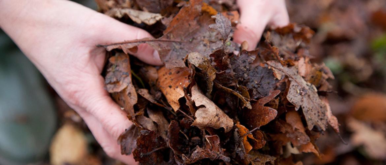 Bladhoudende, bladverliezende en vorstgevoelige planten   beschermen tegen kou
