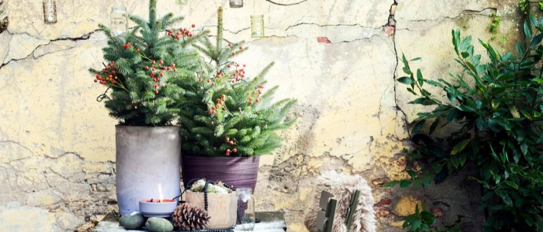 Hoe maak je je tuin klaar voor de feestdagen?