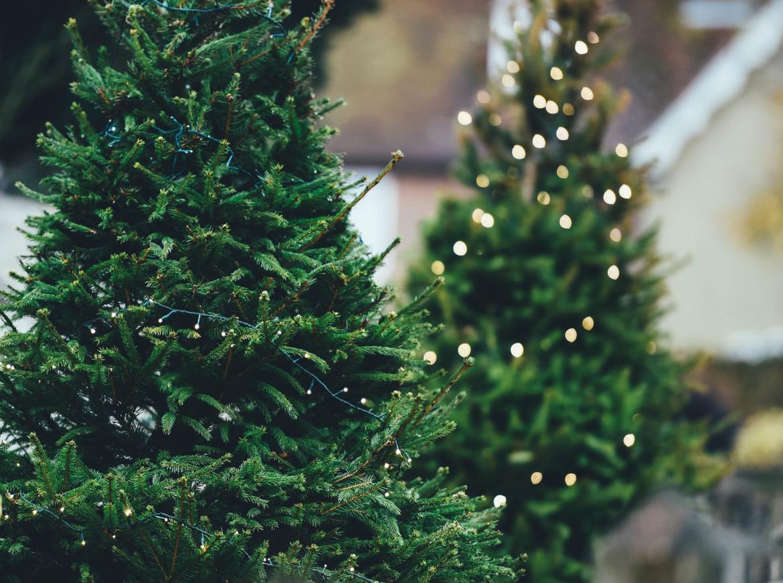 Hoe houd je je kerstboom langer mooi?