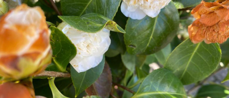 Hoe voorkom je vorstschade aan je planten in het voorjaar?
