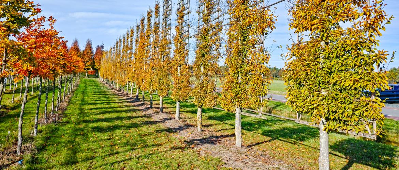 Hoe maak je de juiste keuze voor leibomen in je tuin?